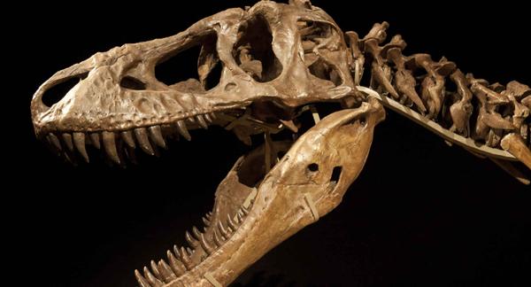 cabezadinosaurio
